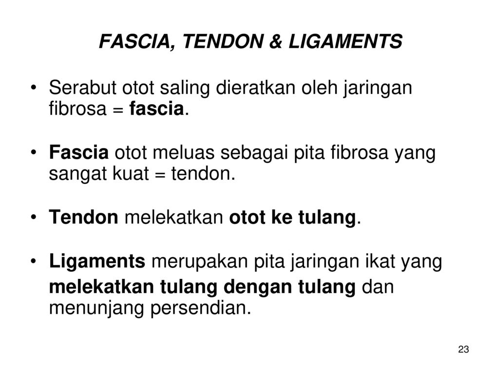 FASCIA, TENDON & LIGAMENTS