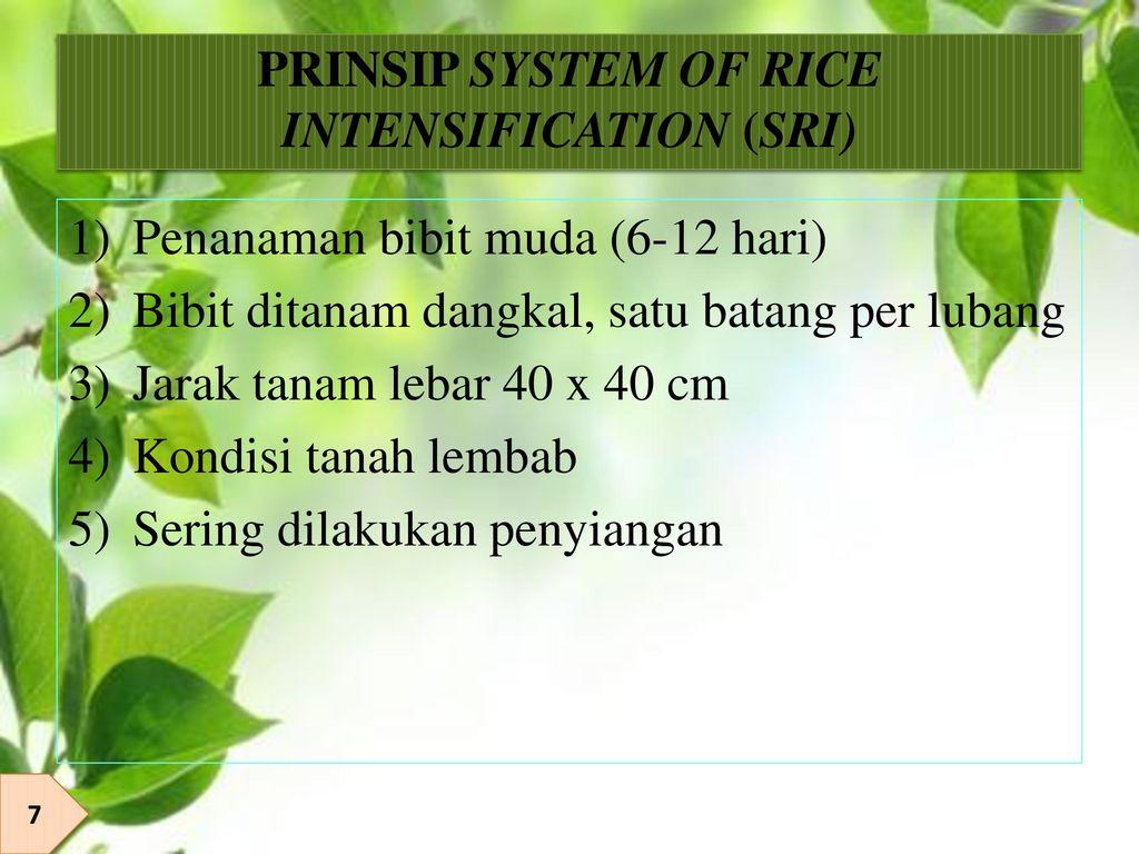 PRINSIP SYSTEM OF RICE INTENSIFICATION (SRI)