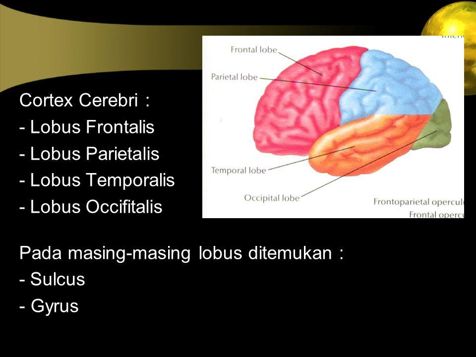 Cortex Cerebri : - Lobus Frontalis. - Lobus Parietalis. - Lobus Temporalis. - Lobus Occifitalis.