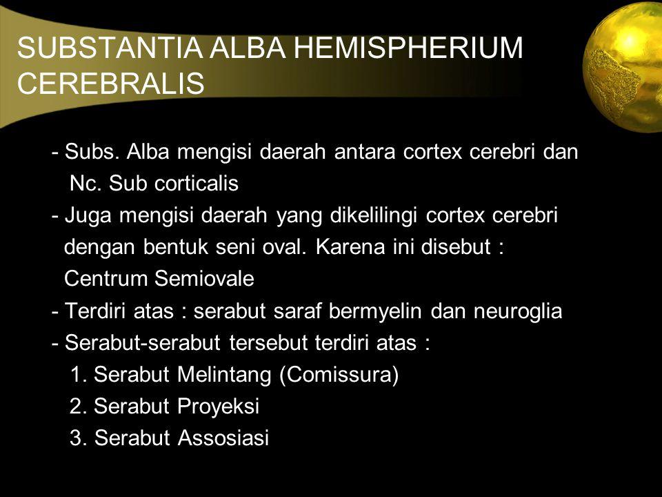 SUBSTANTIA ALBA HEMISPHERIUM CEREBRALIS