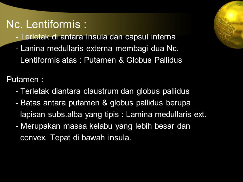 Nc. Lentiformis : - Terletak di antara Insula dan capsul interna