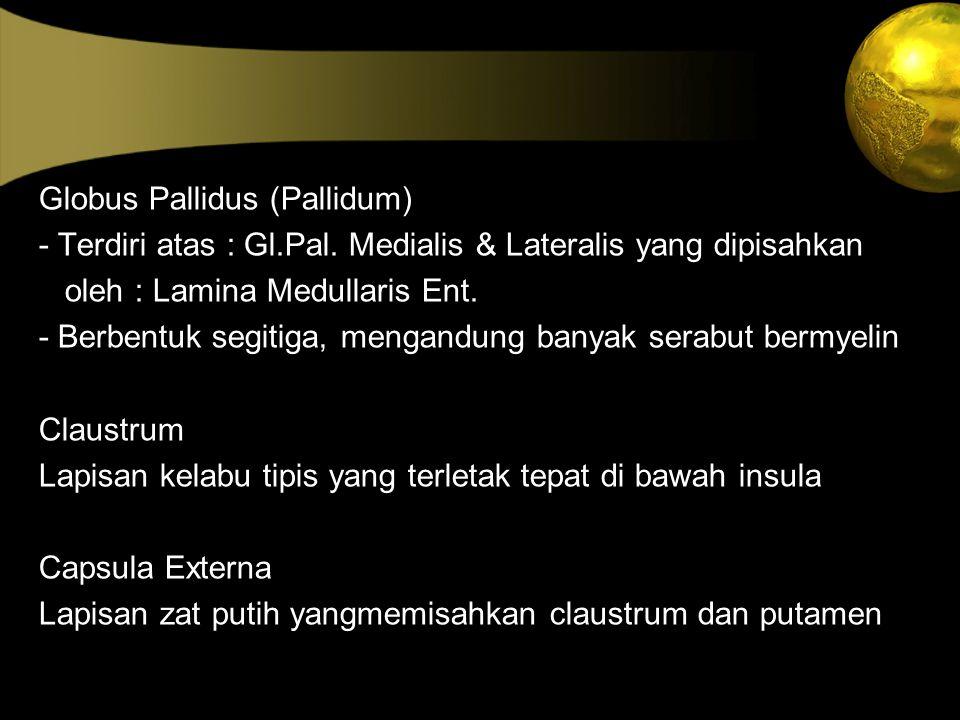 Globus Pallidus (Pallidum)