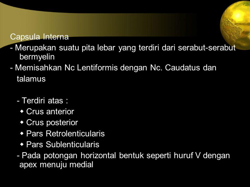 Capsula Interna - Merupakan suatu pita lebar yang terdiri dari serabut-serabut bermyelin. - Memisahkan Nc Lentiformis dengan Nc. Caudatus dan.