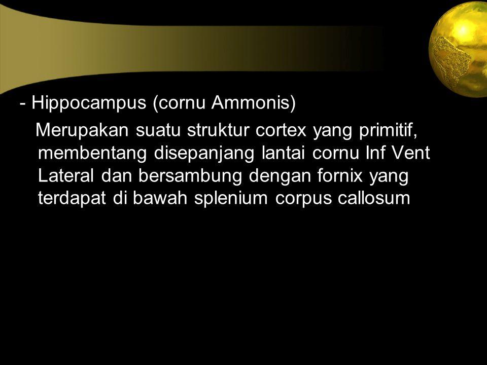 - Hippocampus (cornu Ammonis)