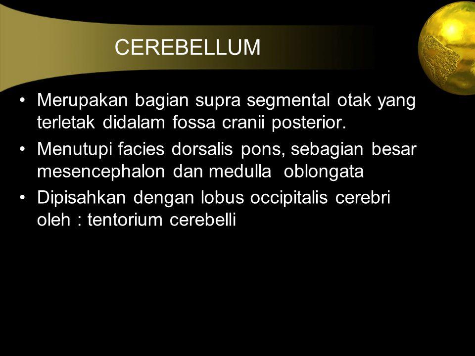 CEREBELLUM Merupakan bagian supra segmental otak yang terletak didalam fossa cranii posterior.