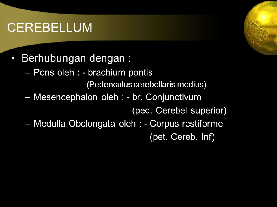 CEREBELLUM Berhubungan dengan : Pons oleh : - brachium pontis