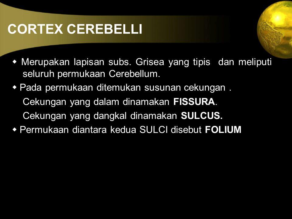 CORTEX CEREBELLI w Merupakan lapisan subs. Grisea yang tipis dan meliputi seluruh permukaan Cerebellum.