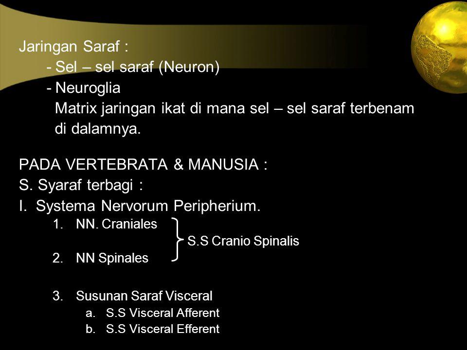 - Sel – sel saraf (Neuron) - Neuroglia