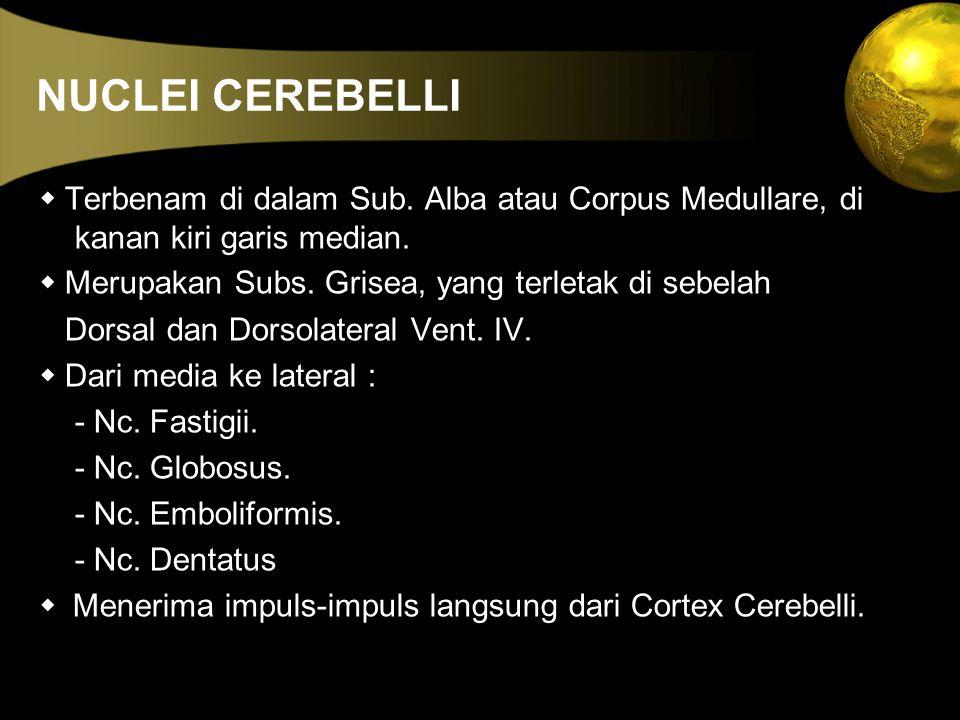 NUCLEI CEREBELLI w Terbenam di dalam Sub. Alba atau Corpus Medullare, di kanan kiri garis median. w Merupakan Subs. Grisea, yang terletak di sebelah.