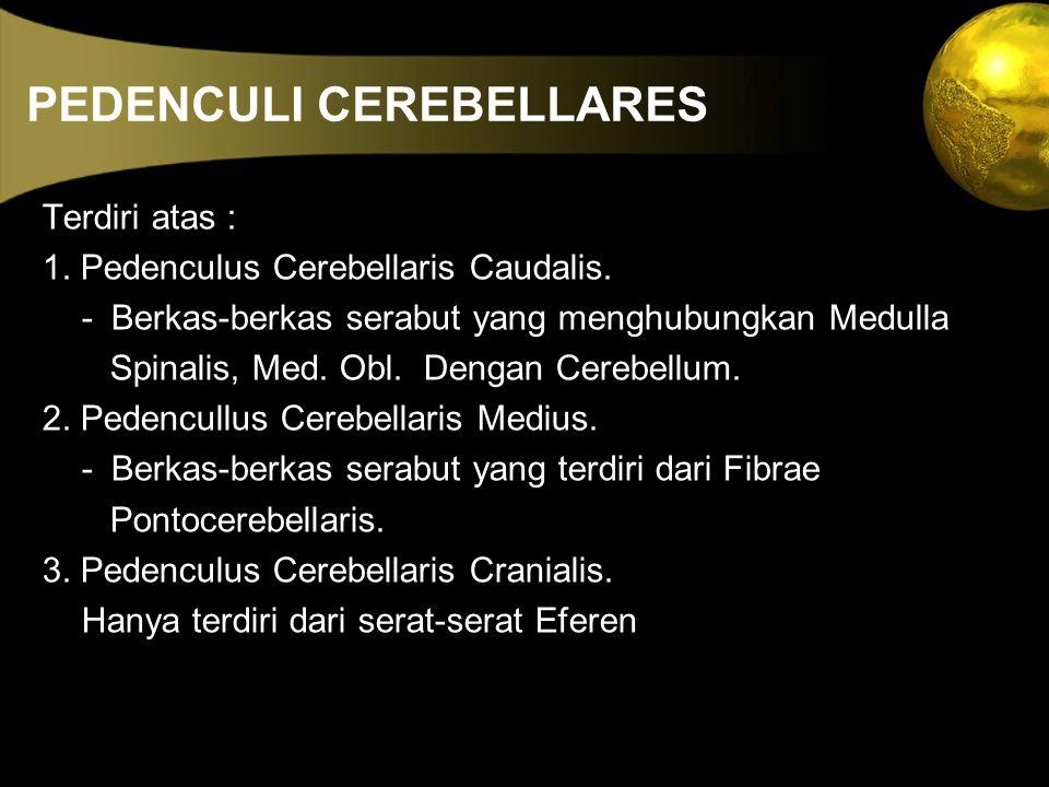 PEDENCULI CEREBELLARES