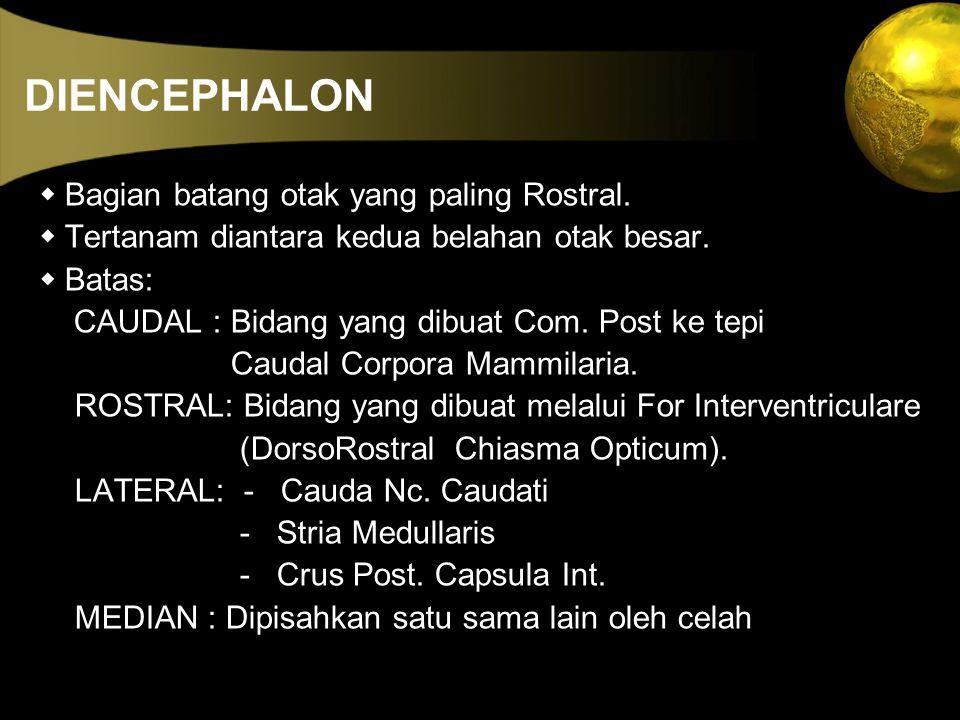 DIENCEPHALON w Bagian batang otak yang paling Rostral.