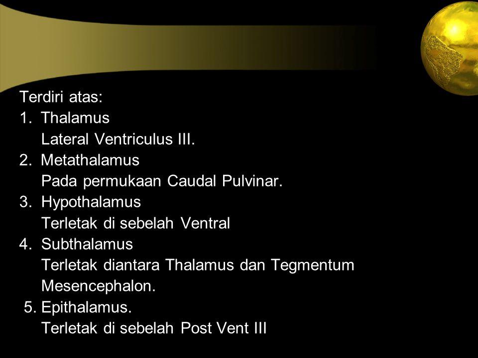 Terdiri atas: 1. Thalamus. Lateral Ventriculus III. 2. Metathalamus. Pada permukaan Caudal Pulvinar.