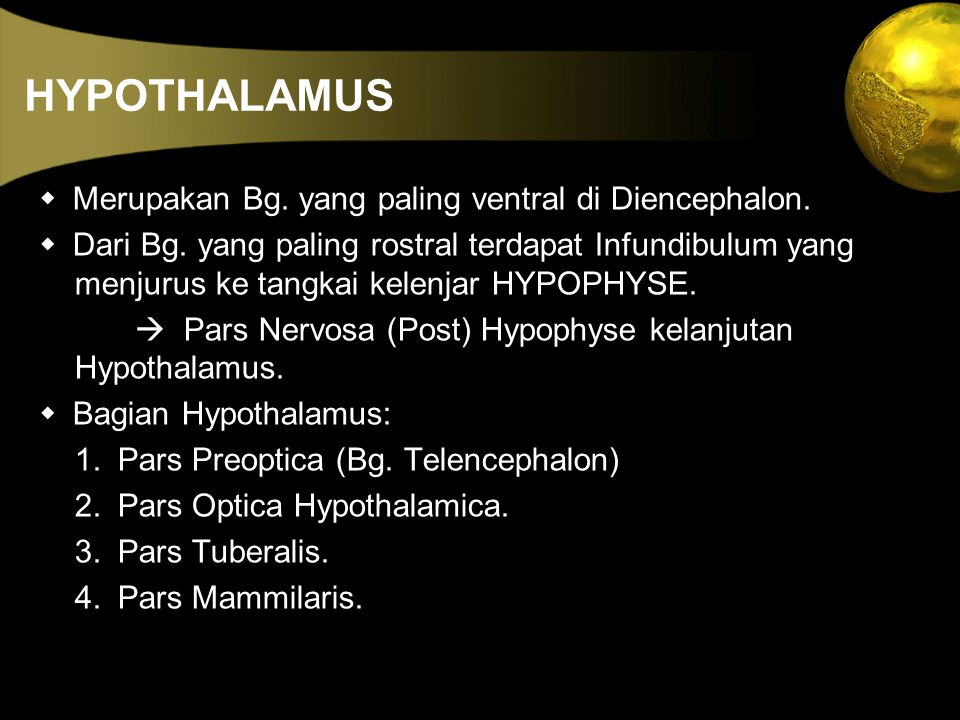 HYPOTHALAMUS w Merupakan Bg. yang paling ventral di Diencephalon.