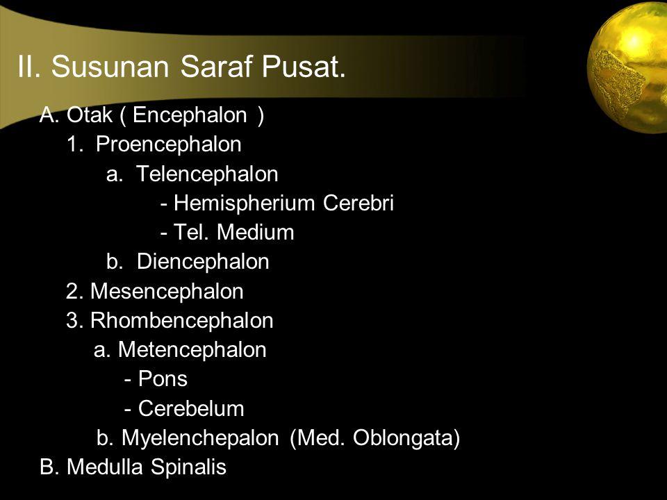 II. Susunan Saraf Pusat. A. Otak ( Encephalon ) 1. Proencephalon