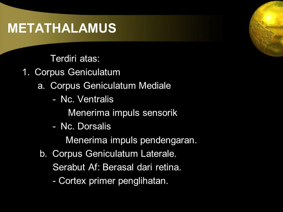 METATHALAMUS Terdiri atas: 1. Corpus Geniculatum
