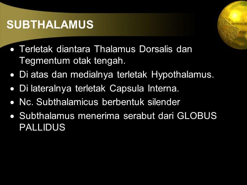SUBTHALAMUS · Terletak diantara Thalamus Dorsalis dan Tegmentum otak tengah. · Di atas dan medialnya terletak Hypothalamus.