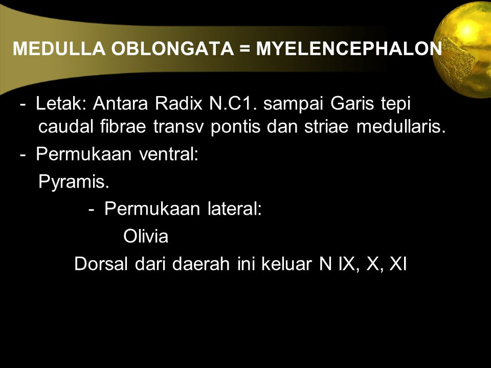 MEDULLA OBLONGATA = MYELENCEPHALON