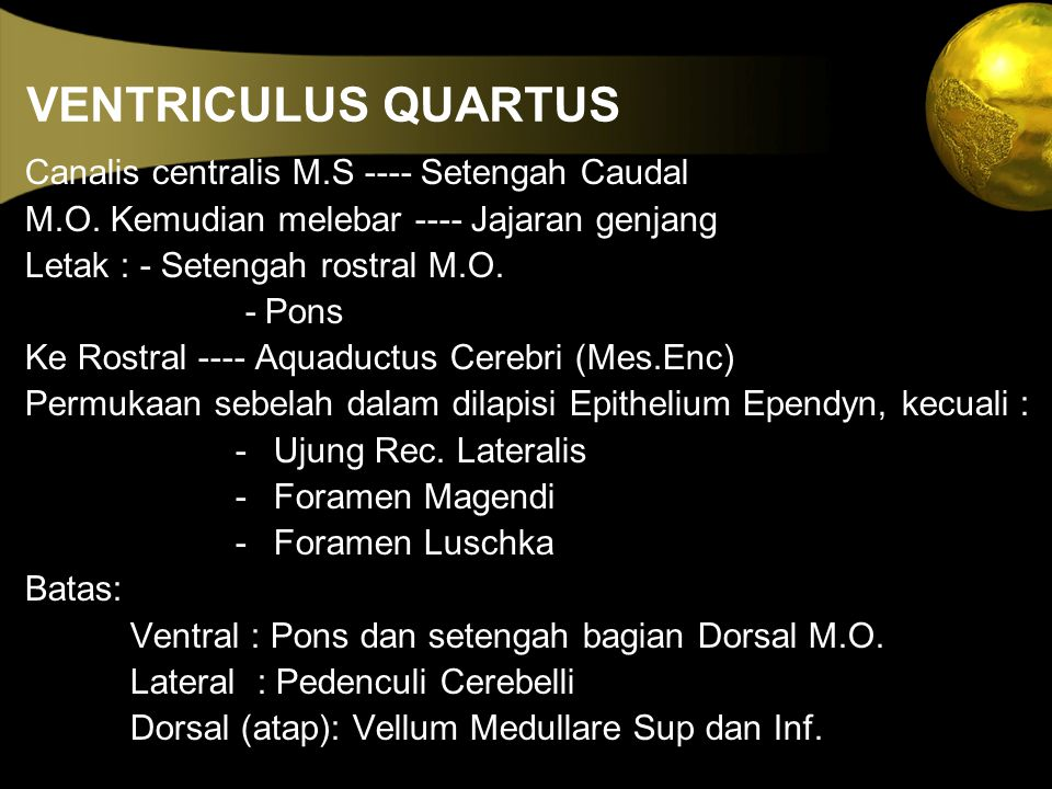 VENTRICULUS QUARTUS Canalis centralis M.S ---- Setengah Caudal