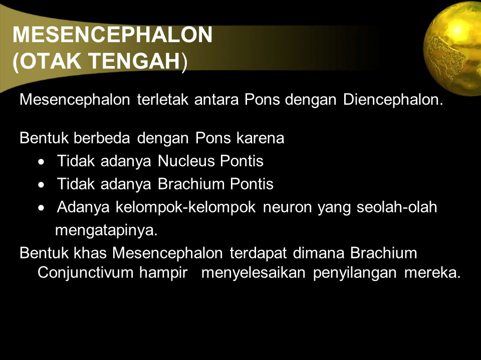 MESENCEPHALON (OTAK TENGAH)