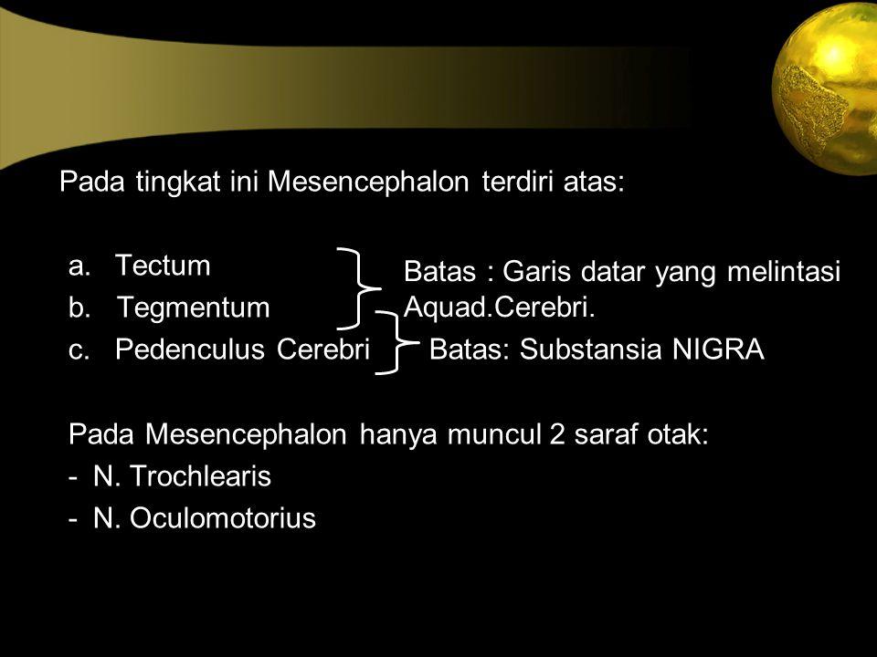 Pada tingkat ini Mesencephalon terdiri atas: