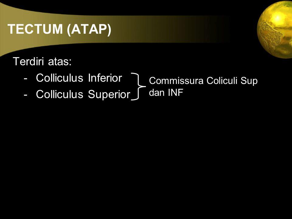 TECTUM (ATAP) Terdiri atas: - Colliculus Inferior