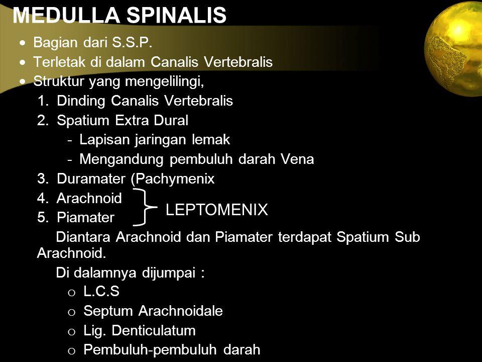 MEDULLA SPINALIS LEPTOMENIX · Bagian dari S.S.P.