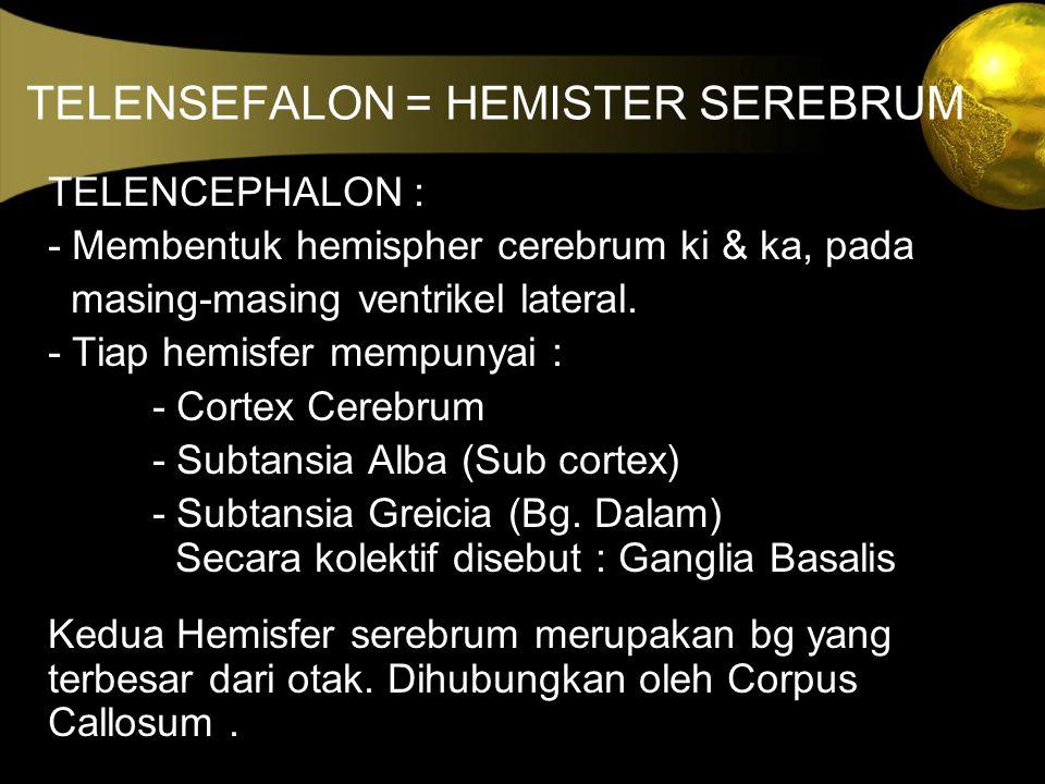 TELENSEFALON = HEMISTER SEREBRUM