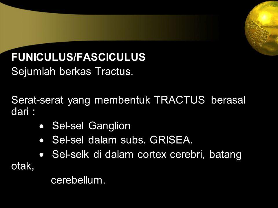 FUNICULUS/FASCICULUS
