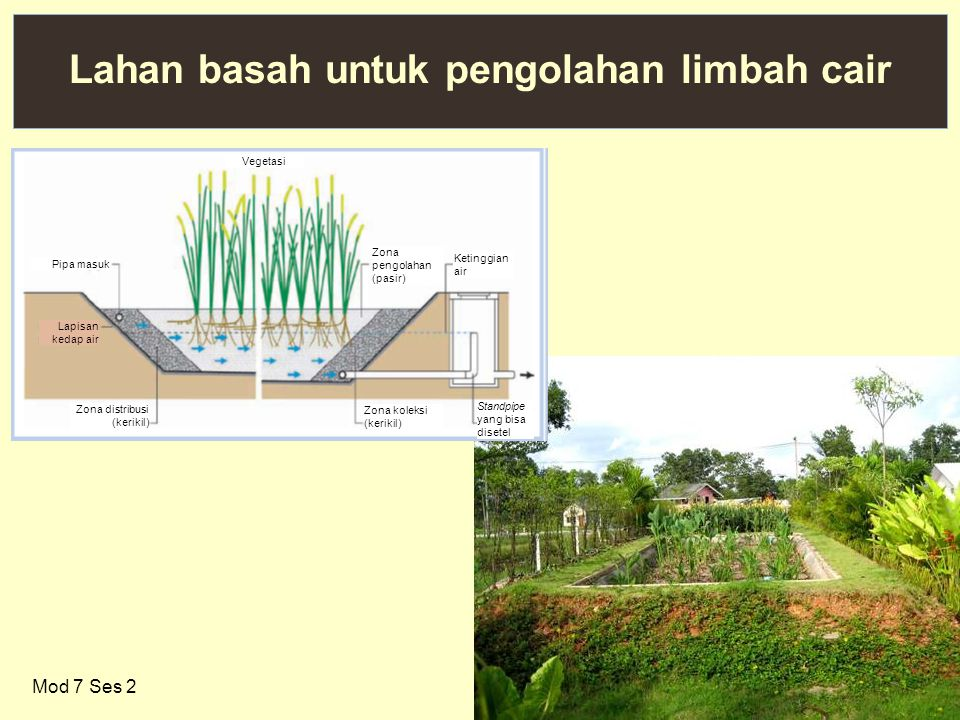 Lahan basah untuk pengolahan limbah cair