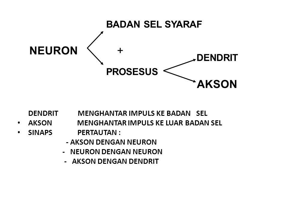 NEURON AKSON + BADAN SEL SYARAF PROSESUS