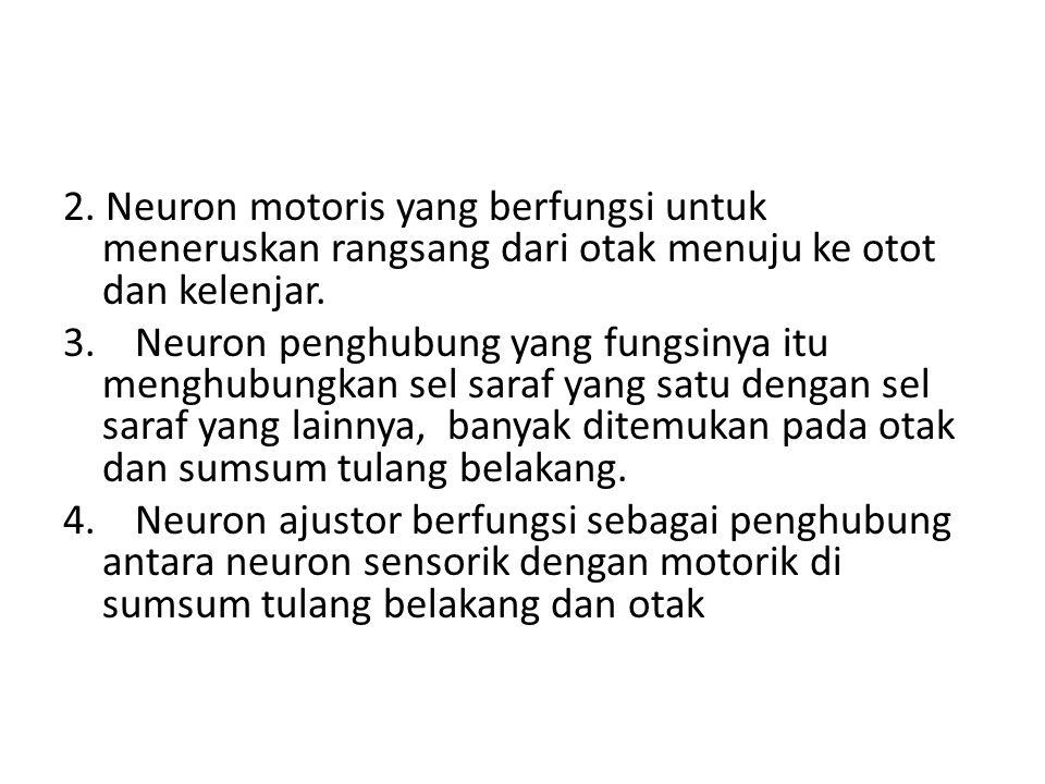 2. Neuron motoris yang berfungsi untuk meneruskan rangsang dari otak menuju ke otot dan kelenjar.