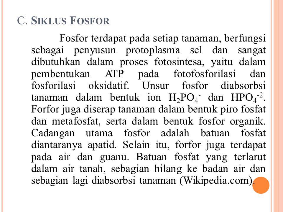 C. Siklus Fosfor