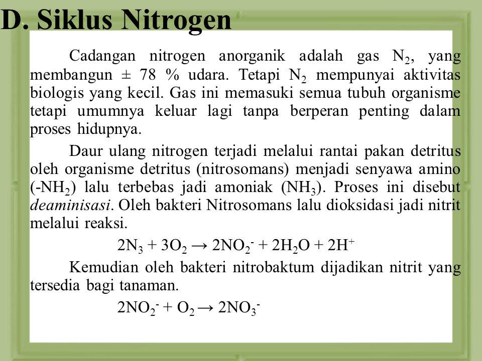 D. Siklus Nitrogen