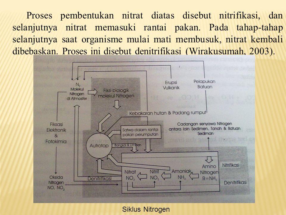 Proses pembentukan nitrat diatas disebut nitrifikasi, dan selanjutnya nitrat memasuki rantai pakan. Pada tahap-tahap selanjutnya saat organisme mulai mati membusuk, nitrat kembali dibebaskan. Proses ini disebut denitrifikasi (Wirakusumah, 2003).