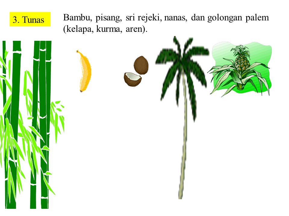 Bambu, pisang, sri rejeki, nanas, dan golongan palem (kelapa, kurma, aren).