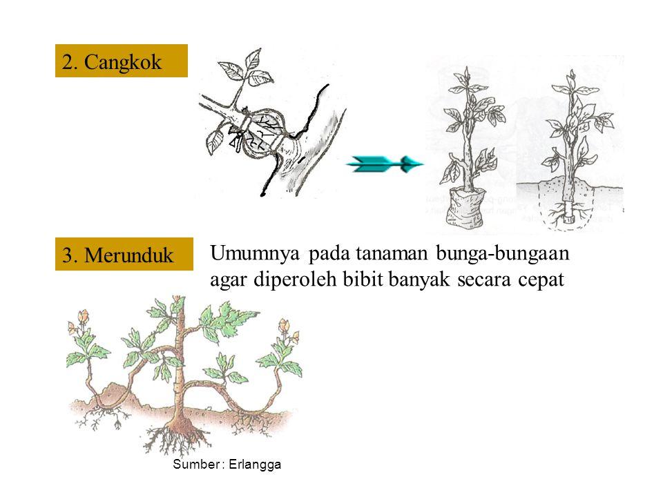 2. Cangkok 3. Merunduk. Umumnya pada tanaman bunga-bungaan agar diperoleh bibit banyak secara cepat.