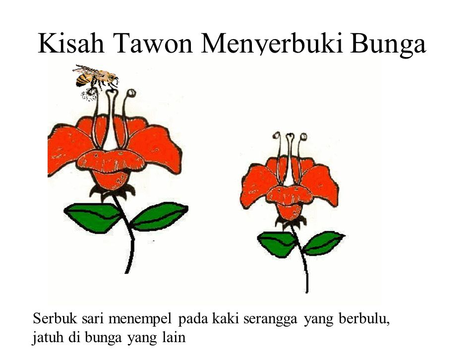Kisah Tawon Menyerbuki Bunga