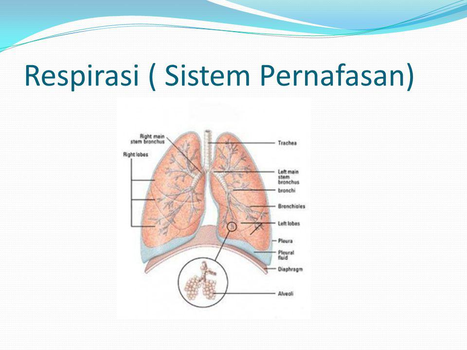Respirasi ( Sistem Pernafasan)