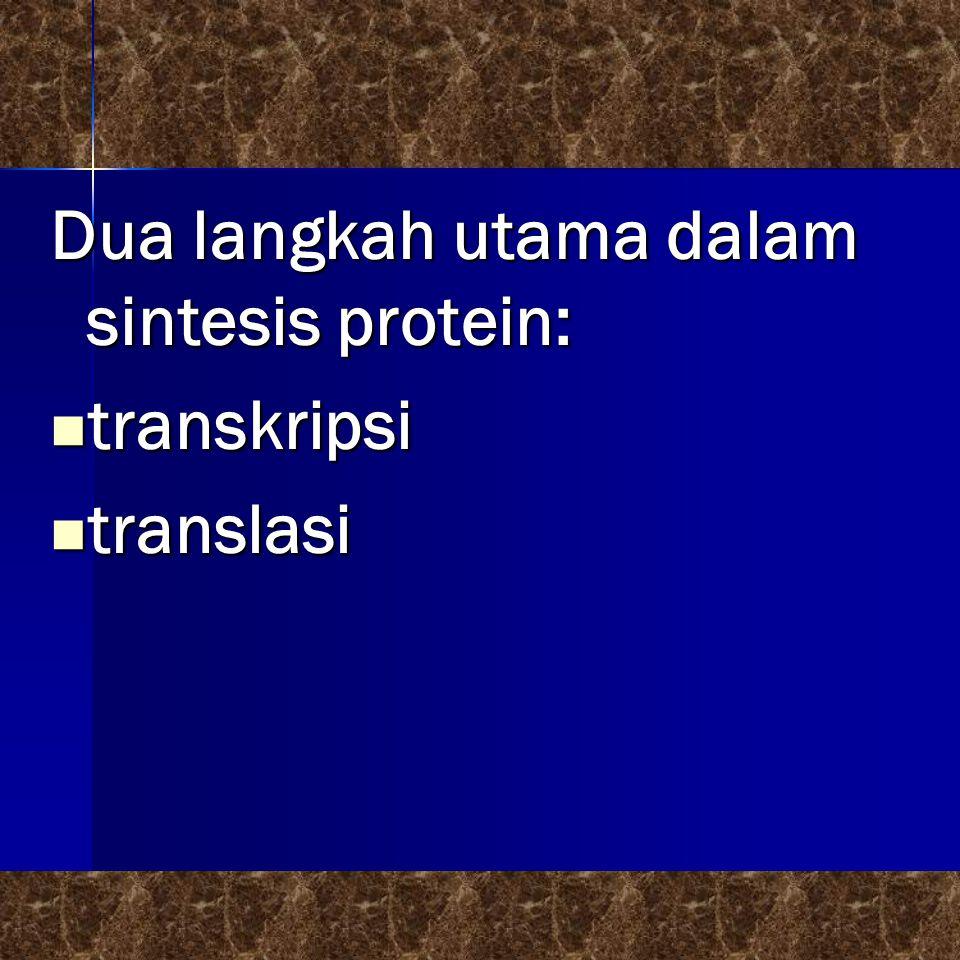 Dua langkah utama dalam sintesis protein: