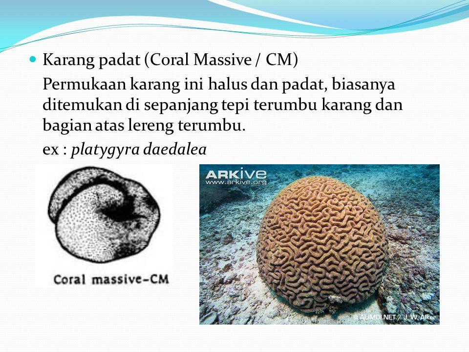 Karang padat (Coral Massive / CM)