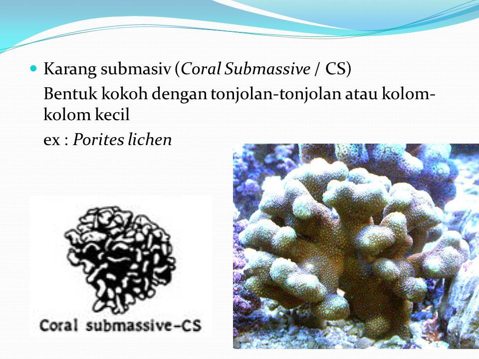 Karang submasiv (Coral Submassive / CS)