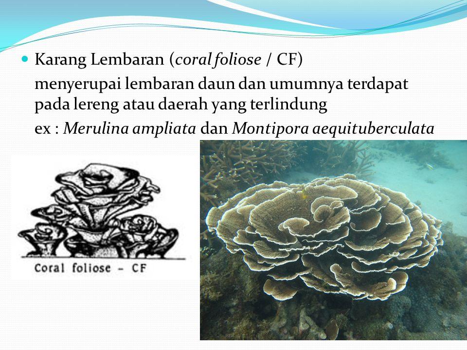 Karang Lembaran (coral foliose / CF)
