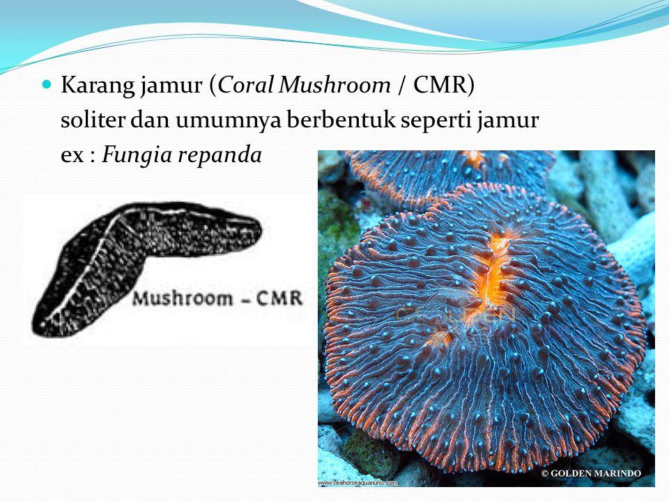 Karang jamur (Coral Mushroom / CMR)