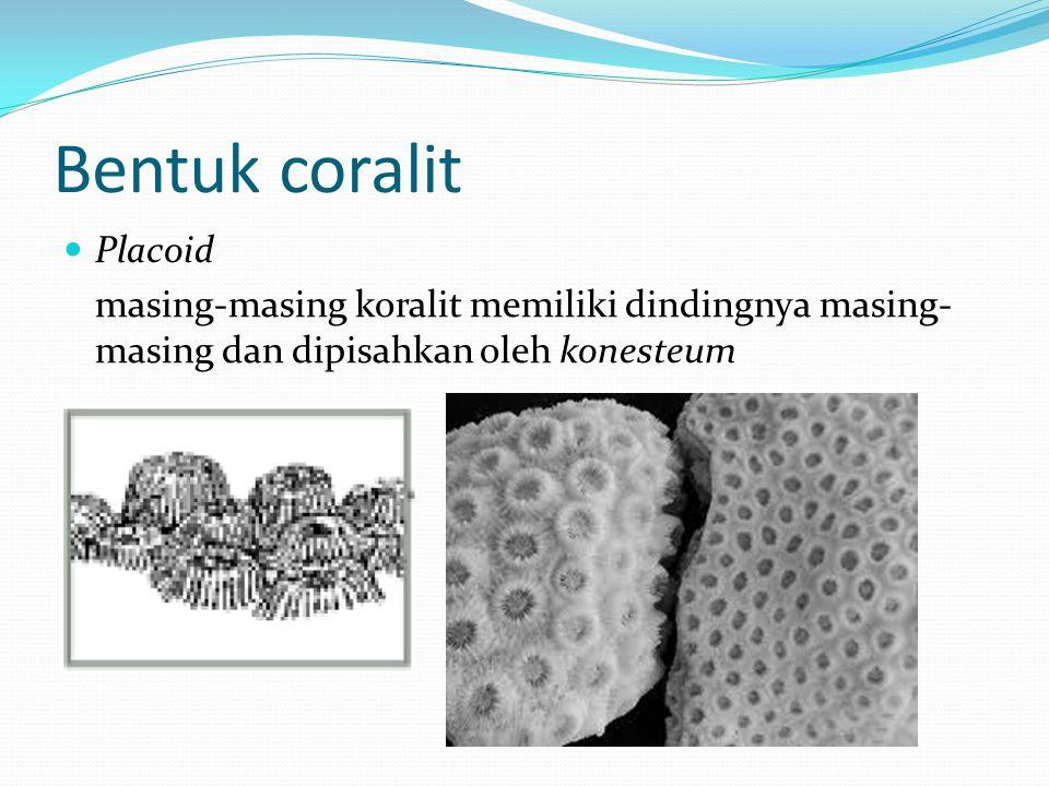 Bentuk coralit Placoid