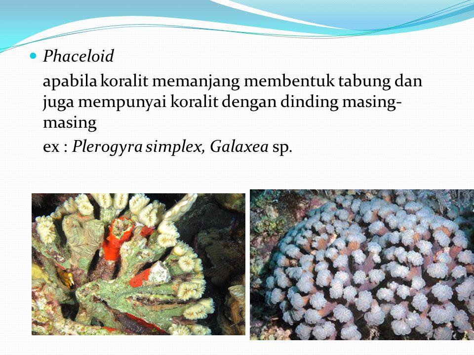 Phaceloid apabila koralit memanjang membentuk tabung dan juga mempunyai koralit dengan dinding masing-masing.