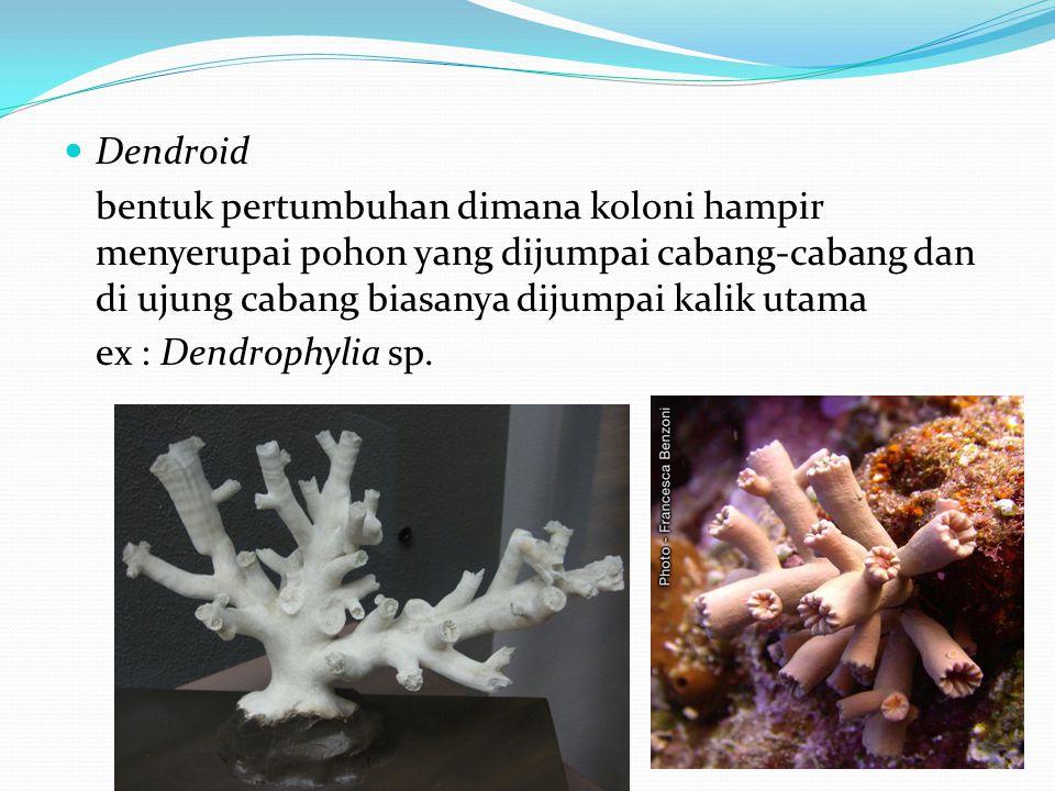 Dendroid bentuk pertumbuhan dimana koloni hampir menyerupai pohon yang dijumpai cabang-cabang dan di ujung cabang biasanya dijumpai kalik utama.