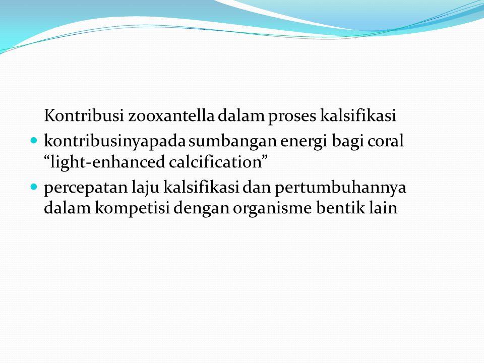Kontribusi zooxantella dalam proses kalsifikasi