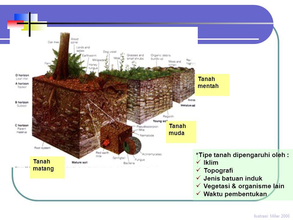 *Tipe tanah dipengaruhi oleh : Iklim Topografi Jenis batuan induk