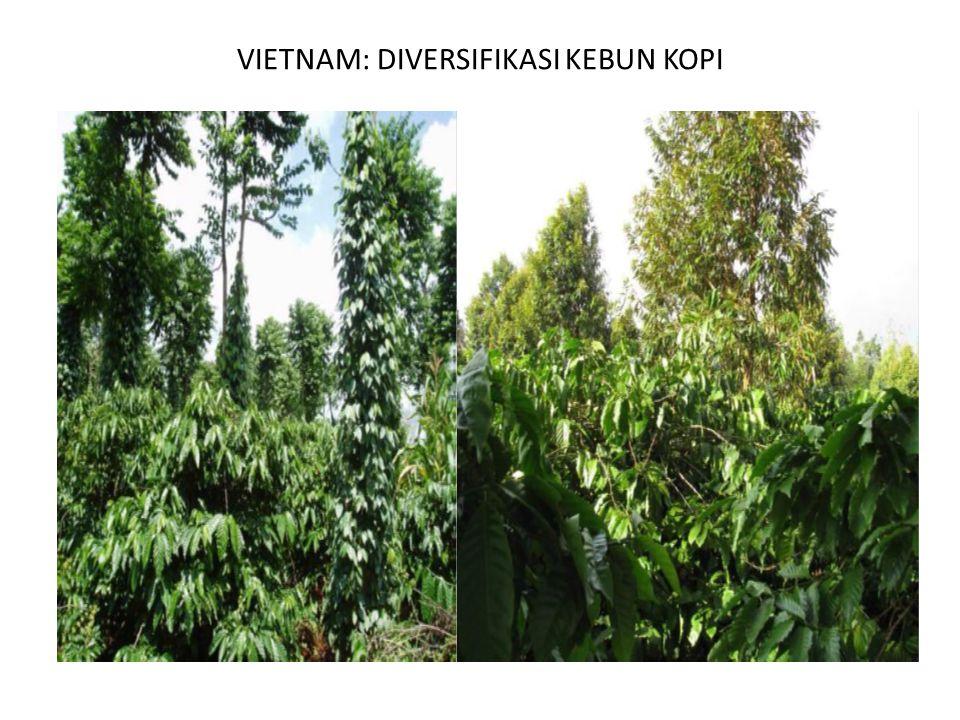 VIETNAM: DIVERSIFIKASI KEBUN KOPI