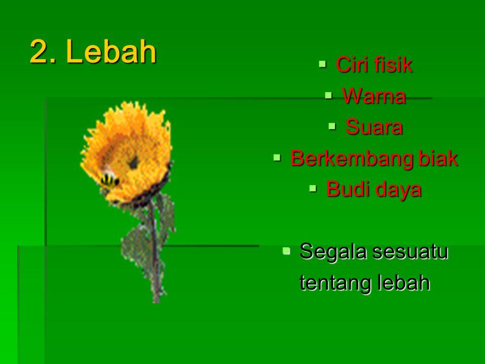 2. Lebah Ciri fisik Warna Suara Berkembang biak Budi daya